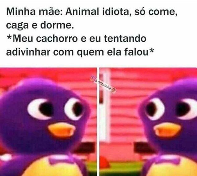 50 Memes Engraçados Brasileiros Do Whatsapp E Facebook Top