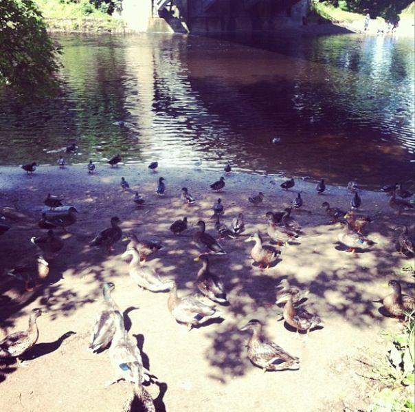 Ilkley Park