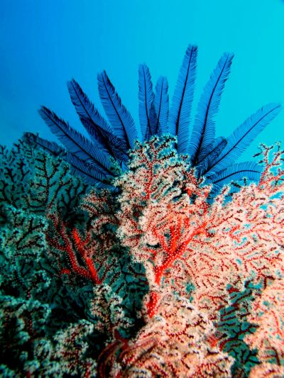 Some of the gorgeous underwater plants we have in the #greatbarrierreef #Australia