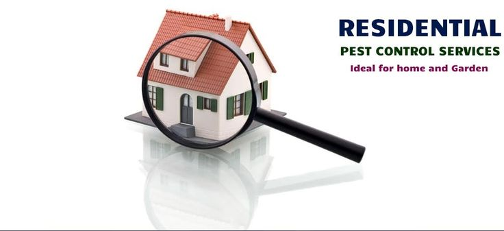 """Termites also call for the services of a professional licensed pest control expert as they can do extensive damage that is NOT covered by insurance. One of the many visual signs is If you find piles of discarded wings or piles of """"frass"""" (a.k.a., termite droppings), these are sure signs you have a problem. The trouble with termites is that by the time you see termite evidence they have already done damage to fences, beams and window frames etc!"""