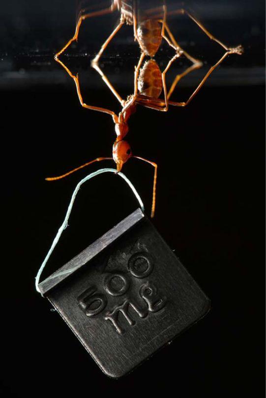 Μία ιδέα: Υπερφυσικά μυρμήγκια.