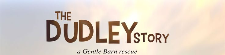 Thank you to The Gentle Barn. Here is the inspirational story of Dudley. Sadly, Dudley passed today. He had a ruptured ulcer that tore apart his stomach. There was nothing the surgeons could do to repair it. If you happen to have the current issue of THE NEW BARKER, we did a feature on dog lover and animal advocate Ronnie N. Graves Bocpo who spent 60 hours crafting the prosthesis for Dudley. Dog speed, Dudley.
