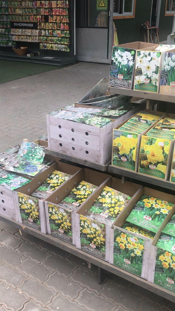 20 Deko Ideen Fur Den Fruhling In 2020 Zwiebel Pflanzen Pflanzen Gartnerei