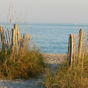 Wilmington's Welcoming Beaches