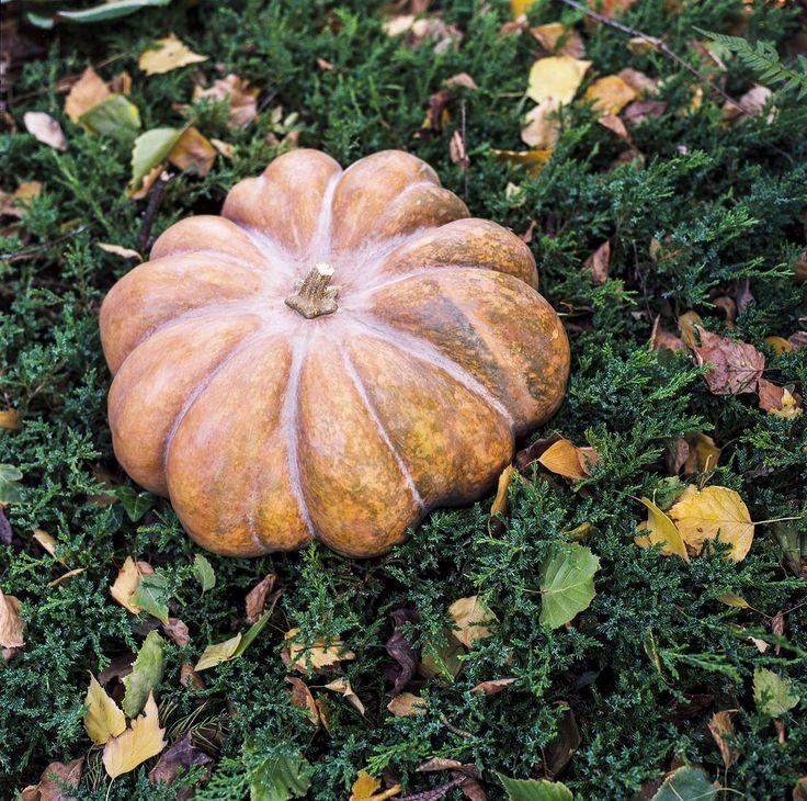 autumn fairytale Hasselblad 500C/M Planar 80mm 2.8  Kodak Portra 160 autumn pumpkin foliage fall cold yellow green fairytale