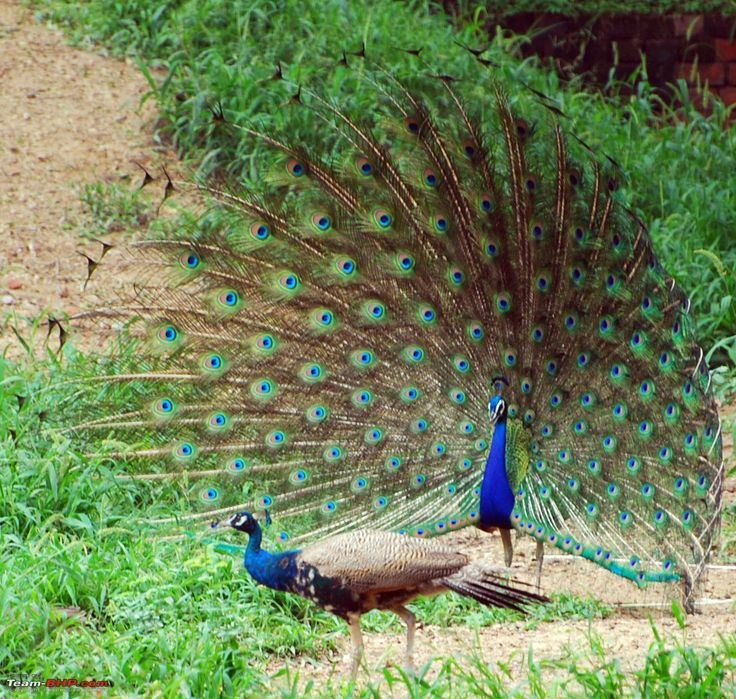 True Colors of India: Wildlife Conservation in India