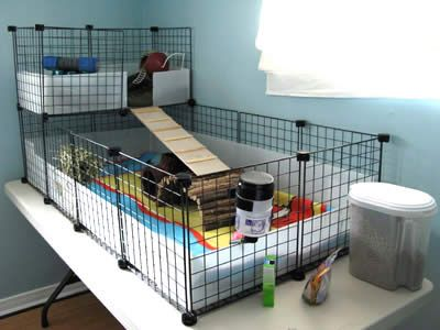 Guinea pig house.  C cage, will be making one, ive been researching the HELL out of these.