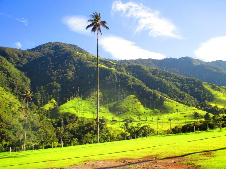 Infinitas palmeras rodeadas de preciosas montañas