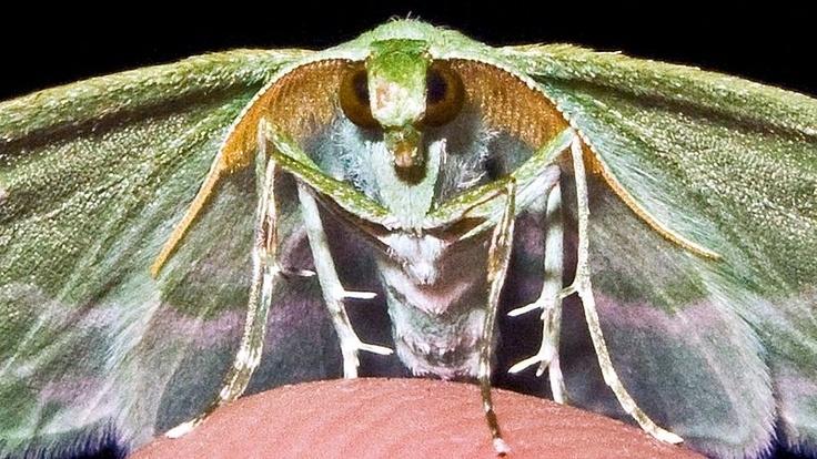 Fotograf zachytil úchvatnou nádheru nočních motýlů– Novinky.cz