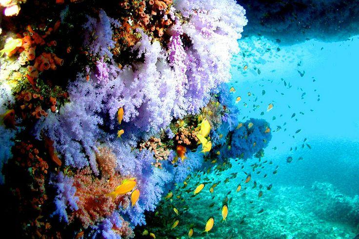 Malediivit #Finnmatkat