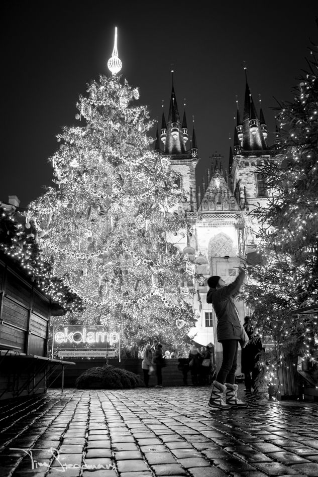 The Christmas tree in the Old Town Square, Prague, 2012. Photo by Tim Steadman. °