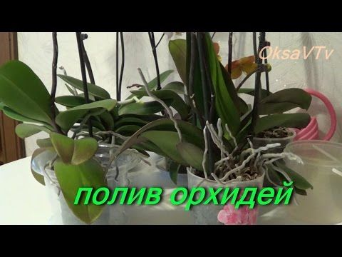 полив орхидеи, как поливать орхидеи Phalaenopsis. how to water orchids Phalaenopsis - YouTube