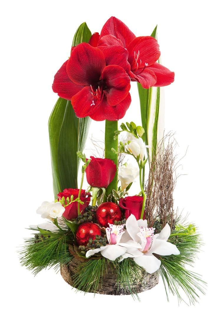 Les 249 meilleures images du tableau art floral noel sur for Amaryllis pour noel