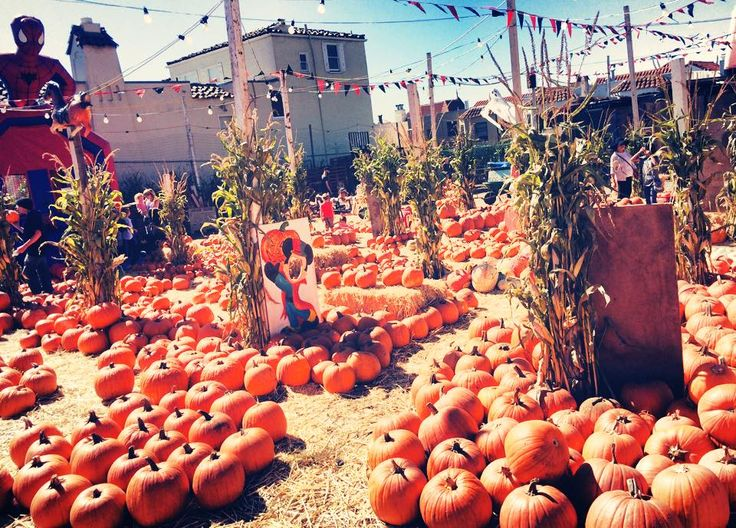 Mapping the Very Best Pumpkin Patches in the Bay Area - Decorative Gourd Season - Curbed SF