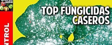7 fungicidas caseros que (algún día) te salvarán