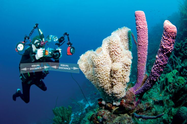 View diving photos, learn underwater photography tips and get reviews of the latest camera and video gear on the market.