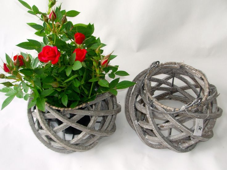 Allerton woven wood strip baskets with real live flowering miniature Roses! a country inspired collection available at www.summerhillnurseries.com.au