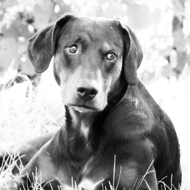 "@tczpeti's photo: ""No food? #instagram #dog #eye #cute """
