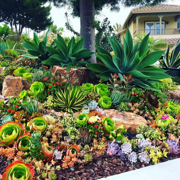 Succulents Garden Ideas inspiration for a contemporary full sun backyard drought tolerant landscape in san luis obispo Find This Pin And More On Endless Succulent Ideas