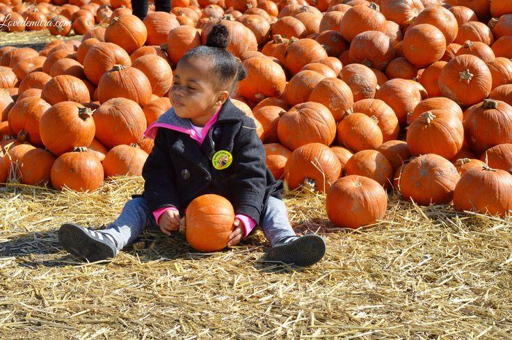 Green Meadows Farm Petting Zoo, pumpkin picking, brooklyn, NY, lovedemitra