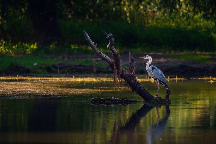 Photo of the day - elegant beauty in Danube Delta. Credits to Dragos Pop #delta #travel #destination #summer #photooftheday