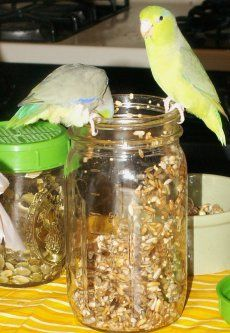 Sprouting for parrots, a really good article from ABirdsLife.com  How to sprout. What to sprout. Good parrot nutrition.