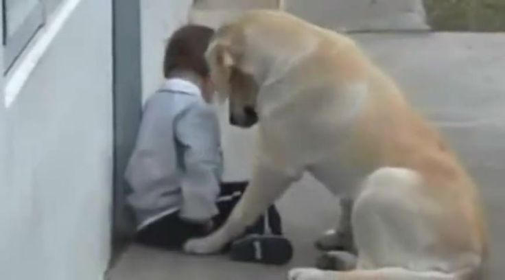 Sweet Dog Watches Over Precious Boy with Down Syndrome - Cute Video