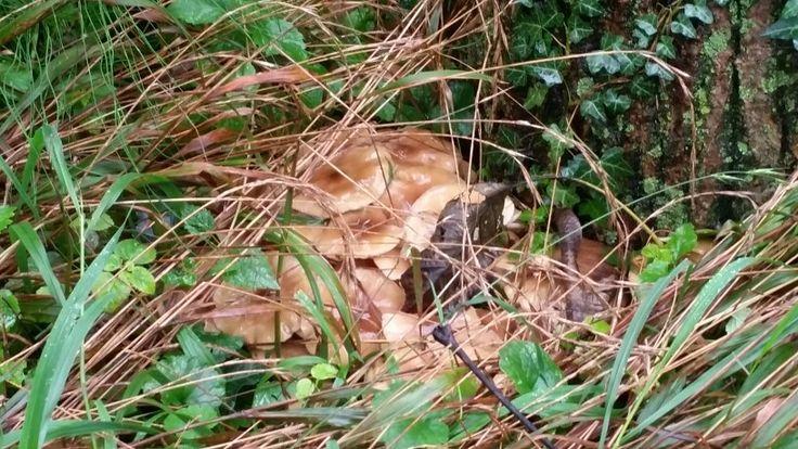 Camminare nel bosco in mezzo ai funghi