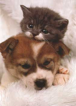 Akita Puppy and Kitten Mothers Day Card $2.75