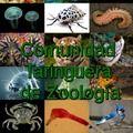 ¡Hola y bienvenido!. Soy Julianbeerworld1 (herpetologo, veterinario y fotógrafo de animales) y te tengo una propuesta: únete a la Comunidad Taringuera de Zoología y sabrás las noticias mas recientes acerca de este grupo de seres vivos