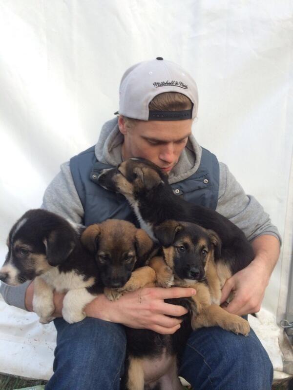 Гас и его собаки: три года спустя