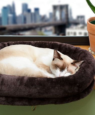 This Chocolate Cat Window Perch by Furhaven Pet Products is perfect! #zulilyfinds