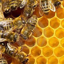 rauwe honing-superfoods steeds belangrijker in onze dagelijkse voeding