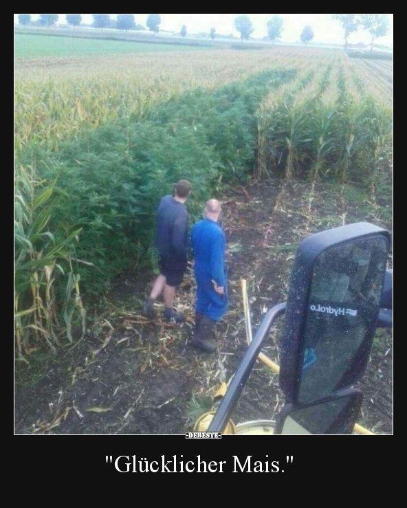 Glücklicher Mais.