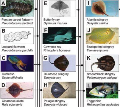 Convergent evolution: Diverse sea creatures evolved to reach same swimming solution