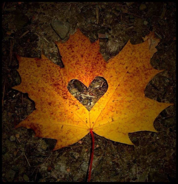 Image result for fall leaves and an orange heart