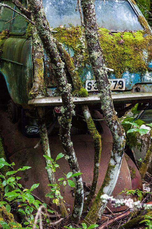 un vieux cimetiere de voitures en suede 9   Un vieux cimetière de voitures en Suède   voiture vintage Suède seconde guerre mondiale photo mo...