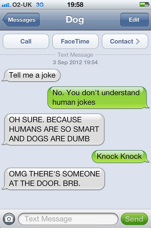 """If dogs could text.. :: xLaurieClarkex~ """"knock knock"""" """"OMG there's someone at the door brb"""" lots of other funnies on this page too :-) bored panda.com"""
