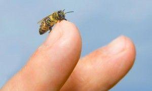 alergia picadura abeja o avispa