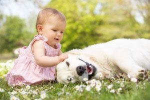 ***Las 4 Mejores Razas de Perros para Niños*** A la hora de adquirir una mascota, una duda asalta a muchas mamás ¿Cuáles son las mejores razas de perros para niños? Aquí te ofrecemos algunas respuestas.....SIGUE LEYENDO EN.... http://comohacerpara.com/las-4-mejores-razas-de-perros-para-ninos_11804h.html