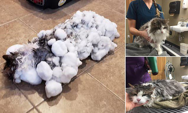 Essentially Frozen Cat Saved After Being Found Buried In Snow Pet Clinic Cats Crazy Cats