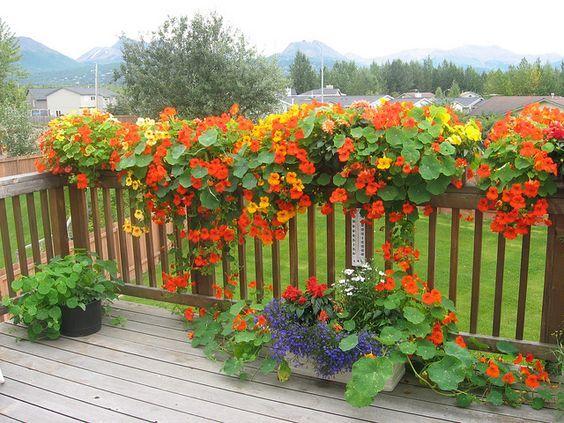 Itt a balkonládák szezonja! Minden évben elhatározod hogy oázist varázsolsz az ablakba, de nem igazodsz ki az egynyári növények között, ezért marad a muskátli?! 10 ötletet mutatok most leírással:
