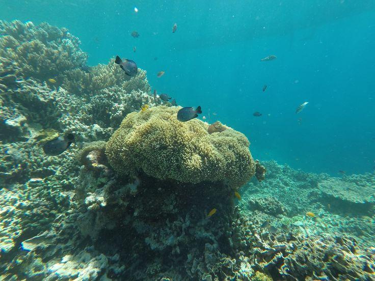 Some coral at Menjangan Island Diving site, Bali - Indonesia