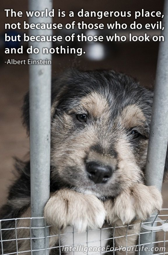 May is animal abuse awareness month. There is nothing more innocent than animals & children. You can rate a person's character on how they treat them.