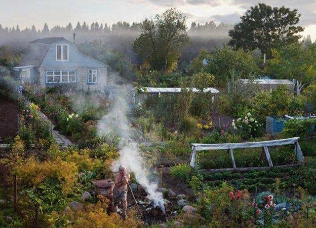 """Wie viel Land braucht man, um alle benötigten Nahrungsmittel selber anbauen zu können? In den """"Datscha-Gärten"""" Russlands lebt eine starkes Wissen um die Selbstversorgung, wie nationale Statistiken …"""