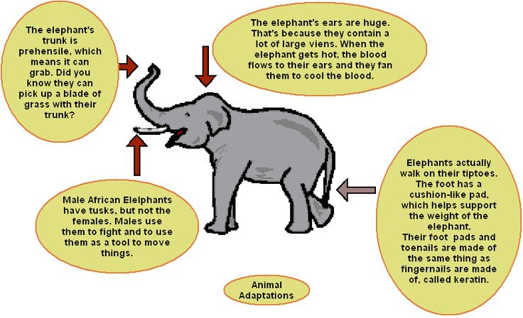 animal adaptation - photo #6