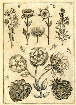 Adriaen Collaert, Florilegium (?)