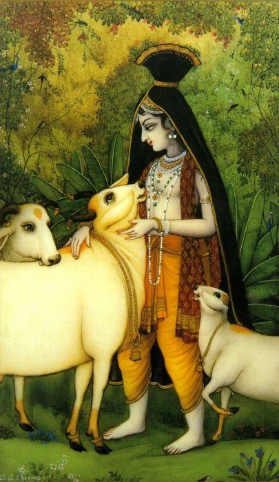 Krishna  loving cows