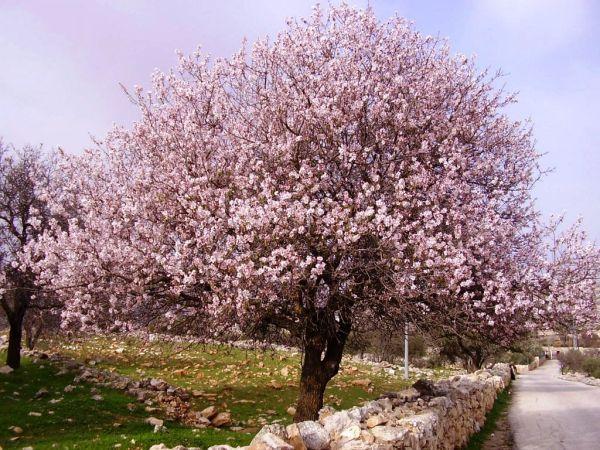 planter un cerisier 3 raisons pour cultiver les fruits. Black Bedroom Furniture Sets. Home Design Ideas