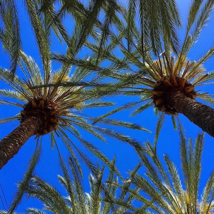Look up more... #palmtrees #lookup #bluesky #california #disneyland #anaheim #takemeback #usa